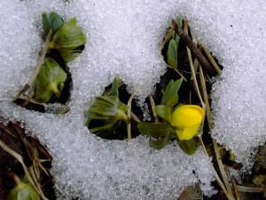 Frühlingsfotos 021