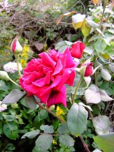 Frühlingsfotos 090
